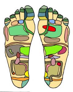 Foot Reflexology Certification Training Michele Mork
