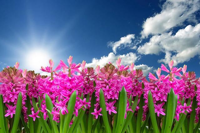 flower-3219718_640